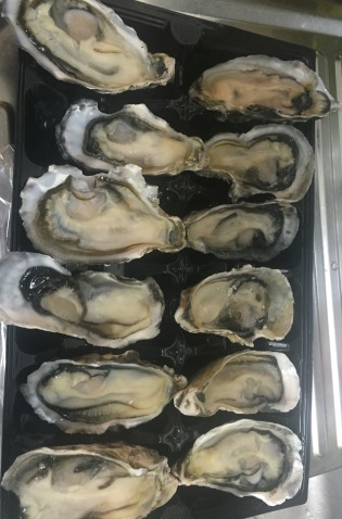 Large Pacific Oysters